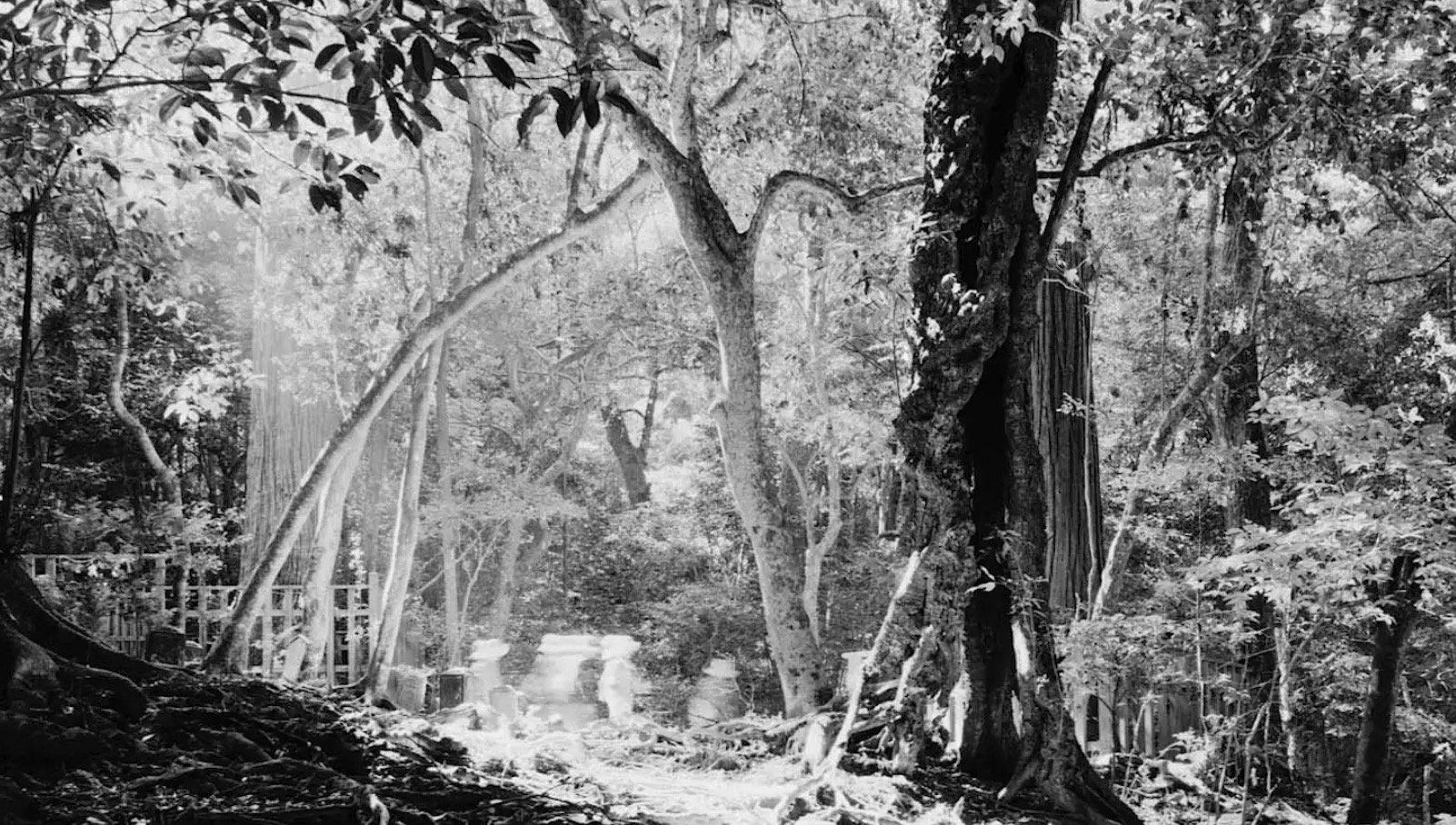 radino - passages photography